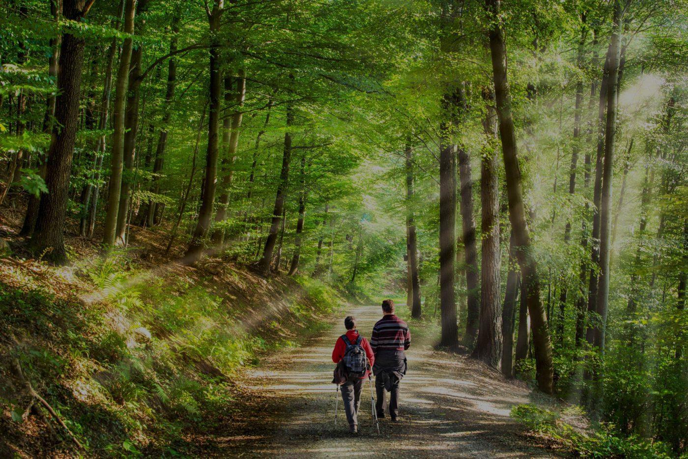 Meerdaagse Wandeltocht Venray route wandelen in Venray natuur